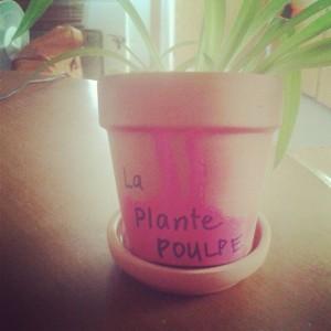 plante_poulpe